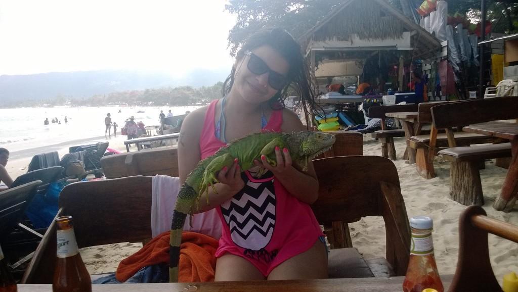 Iguana in Koh Samui