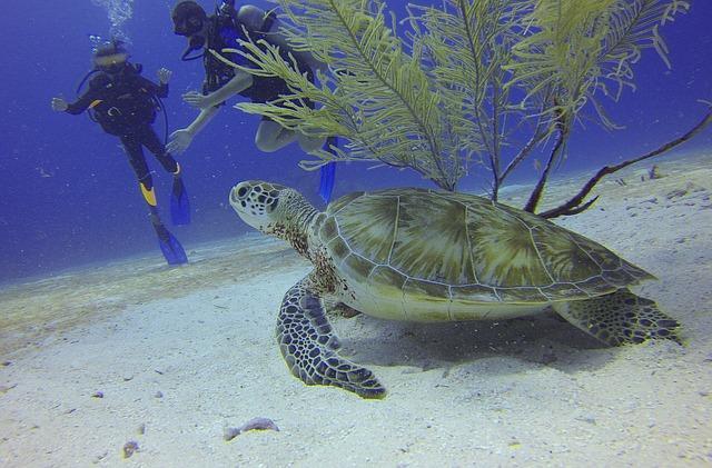 turtle-588497_640