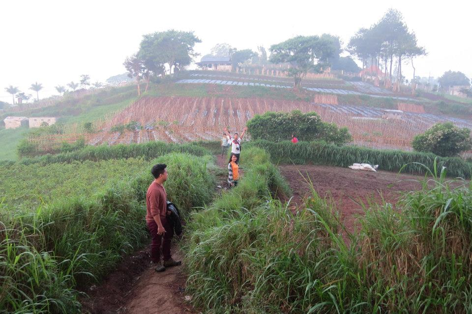 paddy fields walk