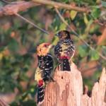 Birding in Zululand Game Reserve