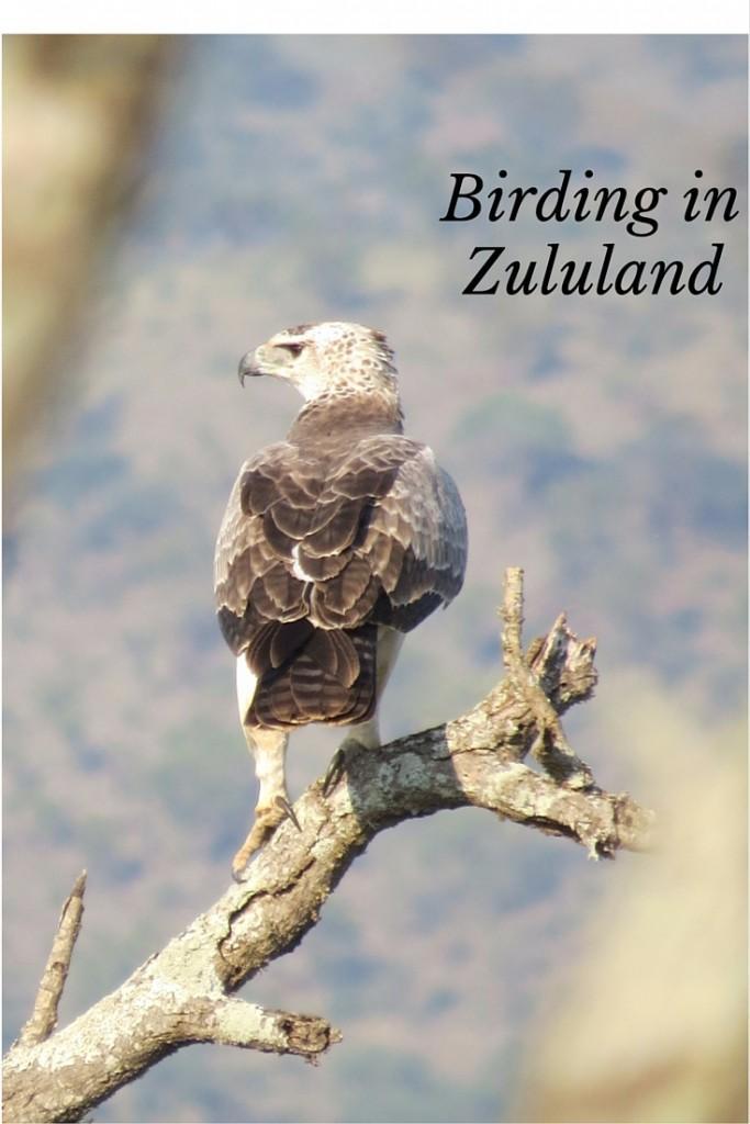 Zululand game reserve