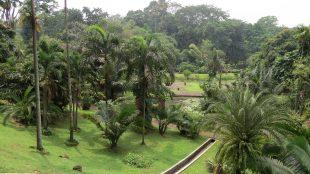 Lovely gardens at Kebun Raya