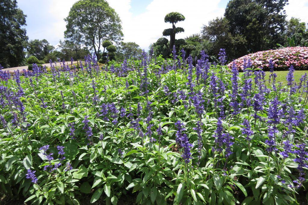 Garden of Doi Tung Royal Villas