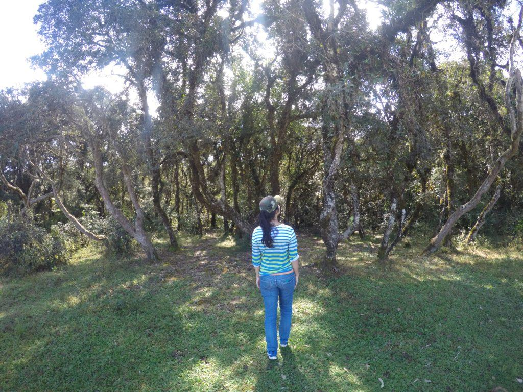 Looking back at the sacred grove