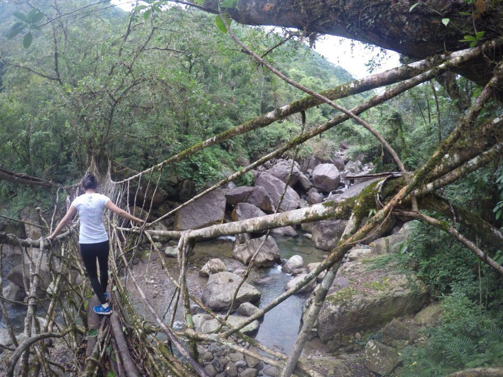 Crossing the single-decker living root bridge