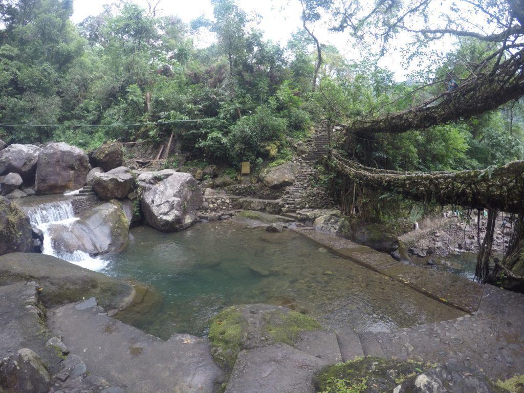 double-decker living root bridge