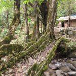 Nongriat – The Hidden Gem of Meghalaya
