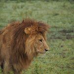 Top 5 Adventures in Africa