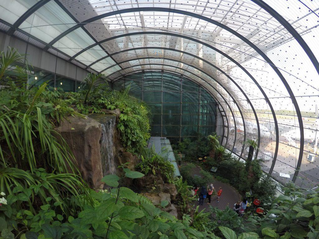 The lovely butterfly garden