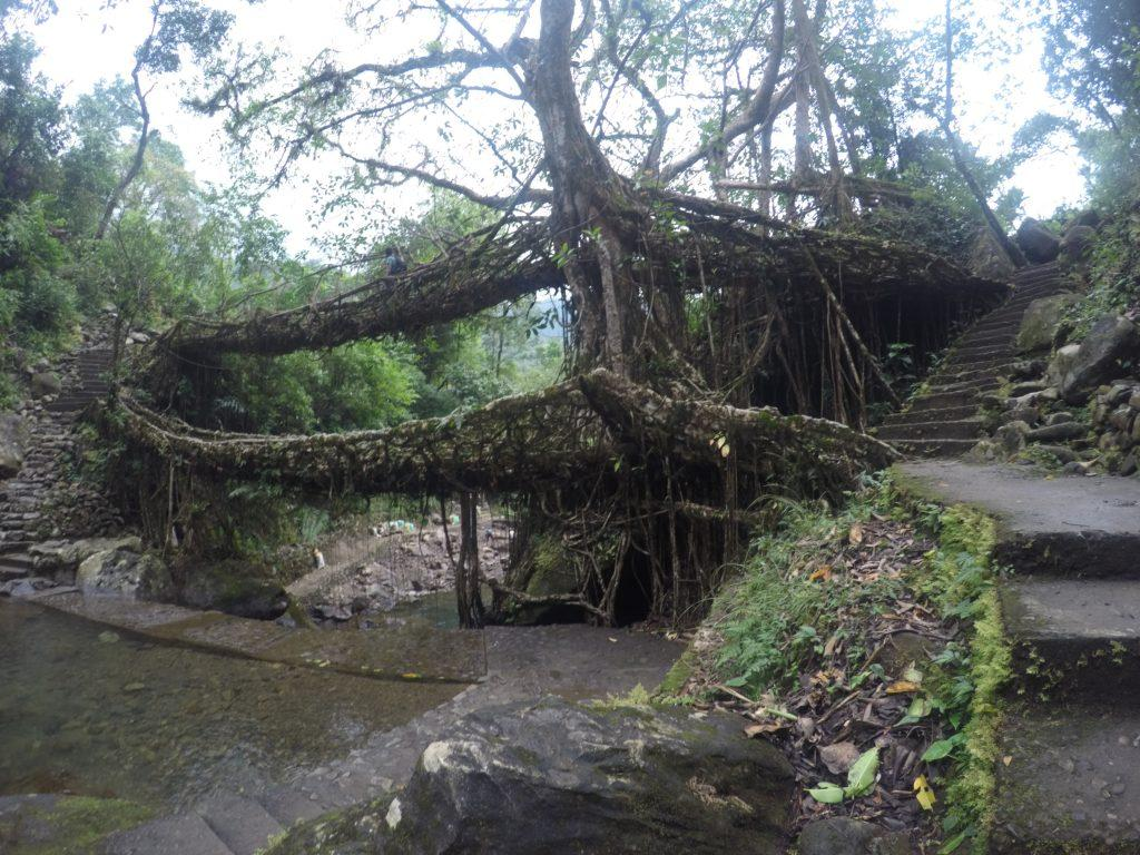 Double decker living root bridge - nongriat