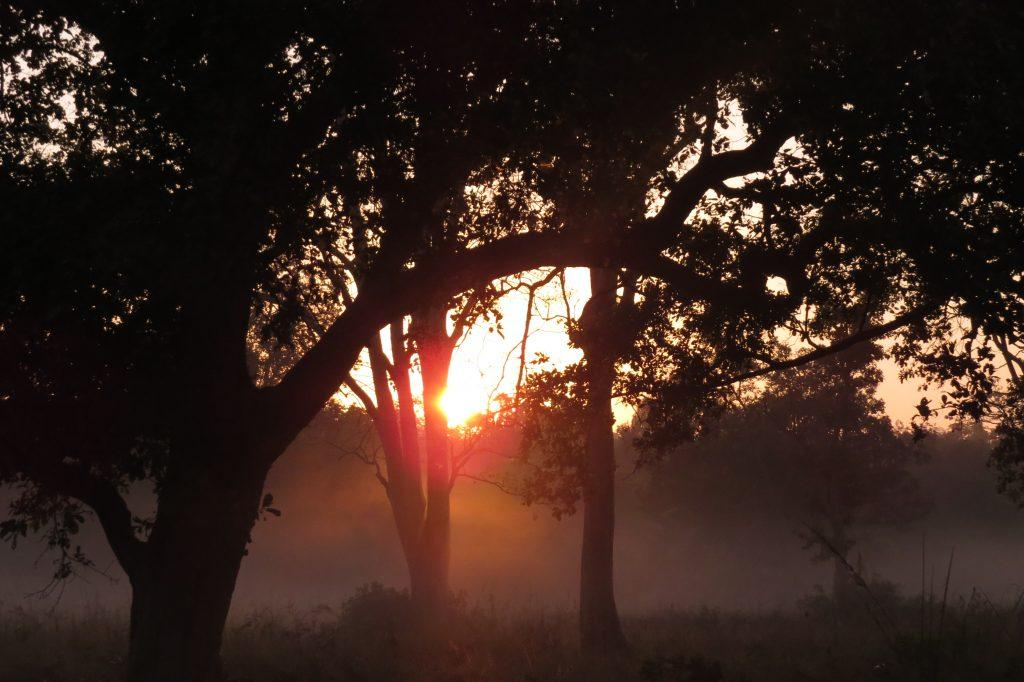 sunrise in corbett