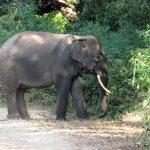 Why Corbett National Park is the Best Wildlife Reserve in India