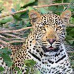 10 Wildlife Parks That Promise The Ultimate African Safari Adventure