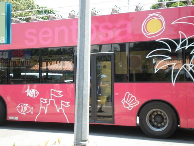 Bright pink buses at Sentosa