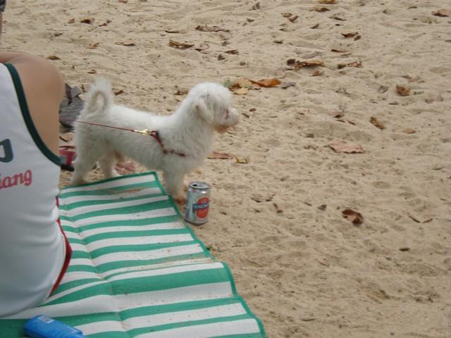 Cute dog enjoying beach time at Sentosa Island