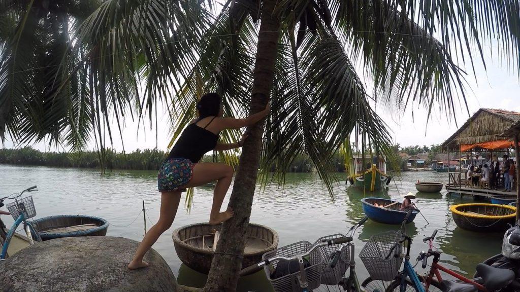 coconut tree climbing fail