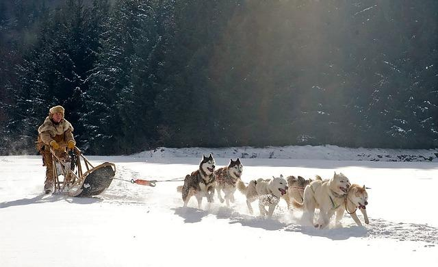 dog sleds arctic