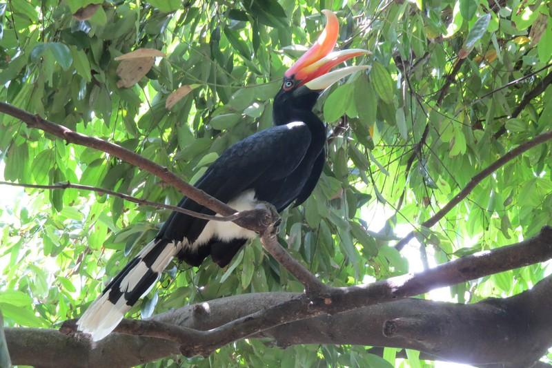 hornbill park kl