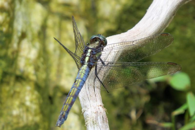 Pretty dragonfly in the forest