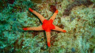 Philippines diving spots